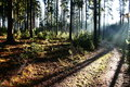 Coniferous forest bright sunshine path in the woods Stock Images