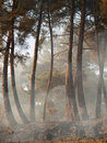Coniferous forest in fog against the sky Royalty Free Stock Photography