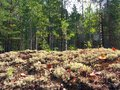 Mossy meadow in Russian forest