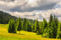 Coniferous forest on a mountain slope steep Stock Photos