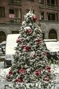 Coniferous tree growing on the street, decorated with Christmas decorations, white balls, red poinsettia and garlands Royalty Free Stock Photo