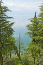Coniferous trees in the shore of lake ohrid macedonia on may Stock Image