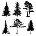 Coniferous trees silhouettes collection on white background Stock Image