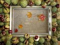 Conkers autumn leaves frame Royalty Free Stock Photo
