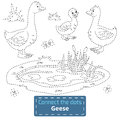 Connect the dots (farm animals set, goose family) Royalty Free Stock Photo