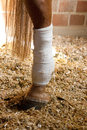 Connected horses leg with a bandage Royalty Free Stock Photography