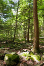 Connecticut Wooded Forest Stock Photo