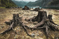 Consequences of deforestation around lake tree stumps after located alpine in austria Royalty Free Stock Photography