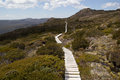 Conservation board walk a over australian bush moorland for environmental Royalty Free Stock Image