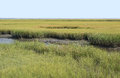 Conservation wetlands of virginia wetland at the national seashore Stock Images