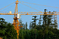 Construction in forest with tower crane is working Stock Photo