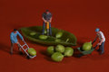 Construction workers in conceptual food imagery with snap peas miniature Stock Photos
