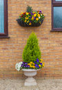 Container and hanging basket with spring winter flowering pansie Royalty Free Stock Photo