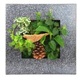 Contemporary green moss wall planter Royalty Free Stock Image