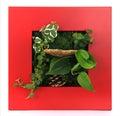 Contemporary green moss wall planter Stock Photography