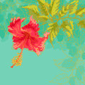 Contour drawing hibiscus flower leaves toned turquoise background watercolor style can be used as background invitation cards Stock Image