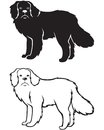 Contour and silhouette of Newfoundland dog Stock Images