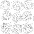Contoured aspen leaves Royalty Free Stock Photo