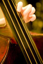 Contrabass Stock Image
