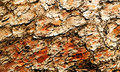 Contrast texture of rough pine bark brown and red colors Stock Photos