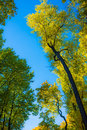 Contrast trees on the blue sky autumn in city garden with beautiful color tree Royalty Free Stock Photos