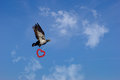 Convey love with flying dove Royalty Free Stock Images