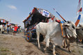 The convoy of cart some farmers bring their cows in a carts in yogyakarta indonesia contestants judged in annual event Royalty Free Stock Photos