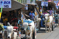 The convoy of cart some farmers bring their cows in a carts in yogyakarta indonesia contestants judged in annual event Stock Photography