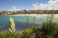 Coogee beach with yucca flowers on a beautiful day in the foreground Royalty Free Stock Image