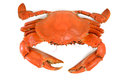 Cooked Blue Crab Royalty Free Stock Photo
