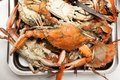 Cooked blue crabs Stock Image