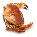 Cooked brown crab isolated on a white studio background Stock Photo