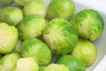 Cooked brussels sprouts freshly in serving dish Royalty Free Stock Photo