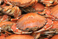 Cooked crab the close up of Stock Photography