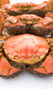 Cooked crabs lined up on white Royalty Free Stock Images