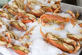 Cooked dungeness crabs on ice display crushed at seafood vendor stall Royalty Free Stock Photos
