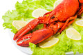 Cooked european common red lobster on plate with green leaves and lemon Royalty Free Stock Photo