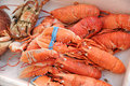 Cooked lobster red at a fish market and ready for the table Royalty Free Stock Images