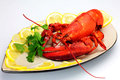 Cooked lobster it is a very delicious Royalty Free Stock Images