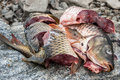 Cooking fish carp, preparation for , cutting the  into pieces Royalty Free Stock Photo