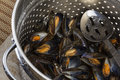 Cooking Fresh Mussels - Moules Marinieres Royalty Free Stock Photo