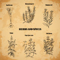 Cooking herbs and spices rosemary saffron mustard mint marjoram melissa retro hand drawn vector illustration banner card scrap Stock Photography