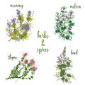Cooking herbs and spices in watercolor style . Rosemary, melissa, basil, thyme.