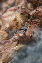 Cooking pieces of meat Stock Images