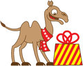 Cool camel receiving a Christmas gift Royalty Free Stock Photo