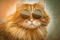 Cool cat with sunglasses Royalty Free Stock Photos