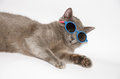 Cool Cat with sunglasses Royalty Free Stock Photo