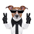 Cool dog with peace fingers in black leather gloves Stock Photos