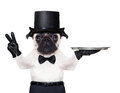 Cool dog peace Royalty Free Stock Photo