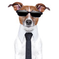 Cool doggy dog with black glasses and a tie Royalty Free Stock Photo